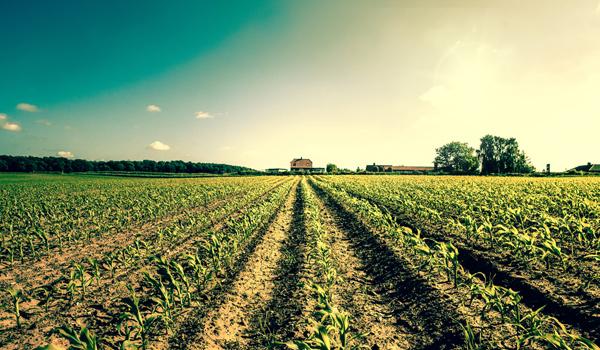 Transformacja spółki z prawem własności nieruchomości rolnej